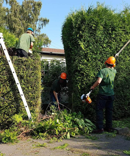 Hedge Trimming Removal