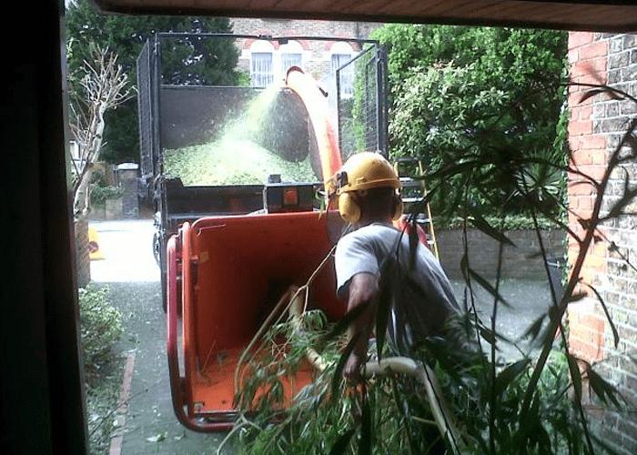 Tree Surgeon Stump Removal Tree Removal Hedge Work 11