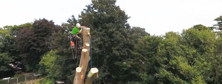 Tree Surgeon Stump Removal Tree Removal Hedge Work 14