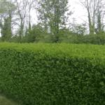 Tree Surgeon Stump Removal Tree Removal Hedge Work 32