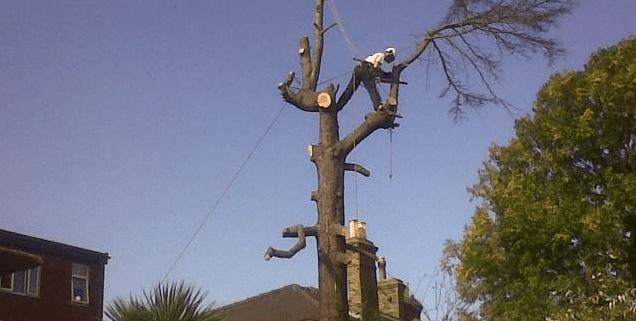 Tree Surgeon Stump Removal Tree Removal Hedge Work 34