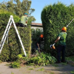 Tree Surgeon Stump Removal Tree Removal Hedge Work 39