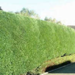 Tree Surgeon Stump Removal Tree Removal Hedge Work 40