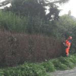 Tree Surgeon Stump Removal Tree Removal Hedge Work 41