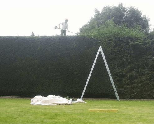 Tree Surgeon Stump Removal Tree Removal Hedge Work 43