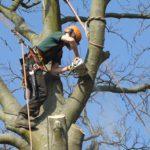 Tree Surgeon Stump Removal Tree Removal Hedge Work 6