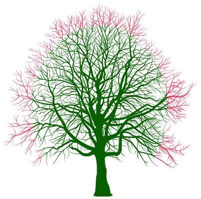Rochdale Tree Crowning