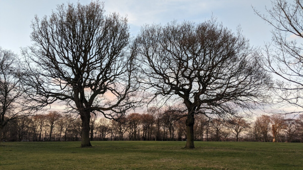 Rochdale Tree Surgeon