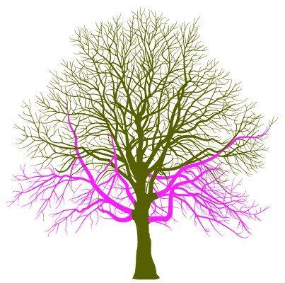 Tree Crown Thinning 1